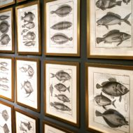 A set of 24 18th Century French engravings of exotic fish