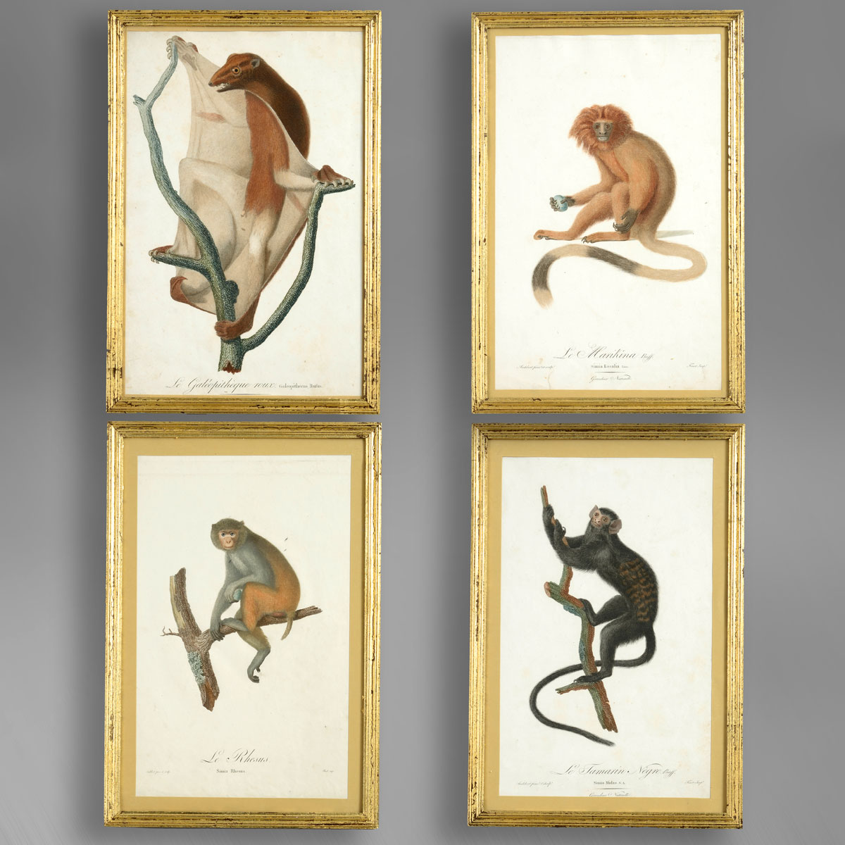 Four Monkey Prints
